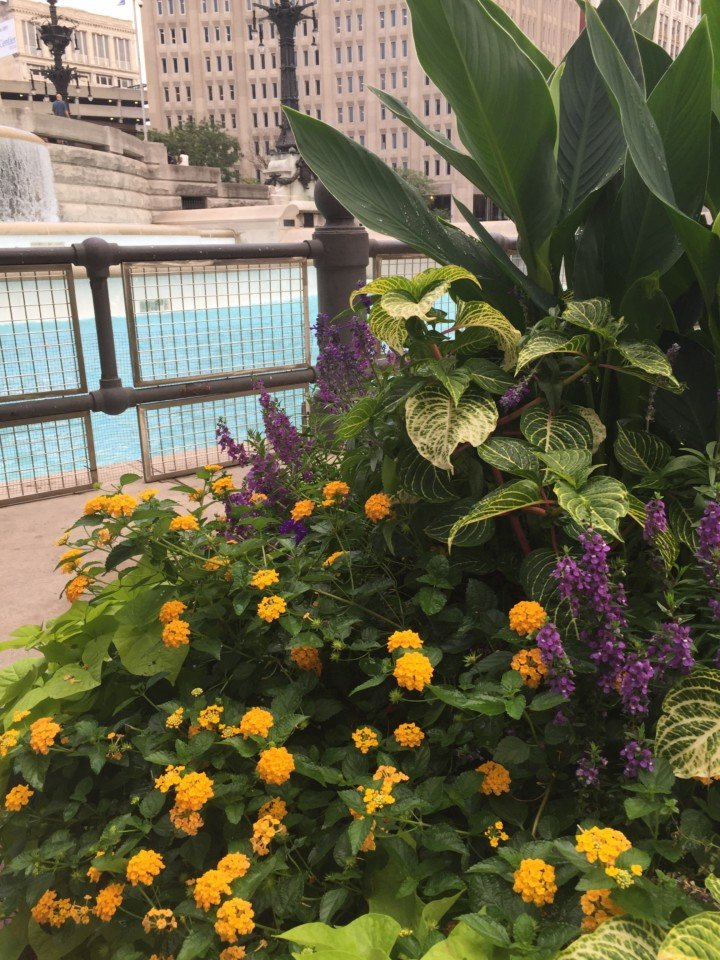 Pretty planters everywhere!